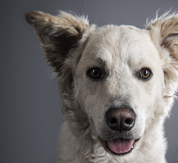 Hundeprojekt