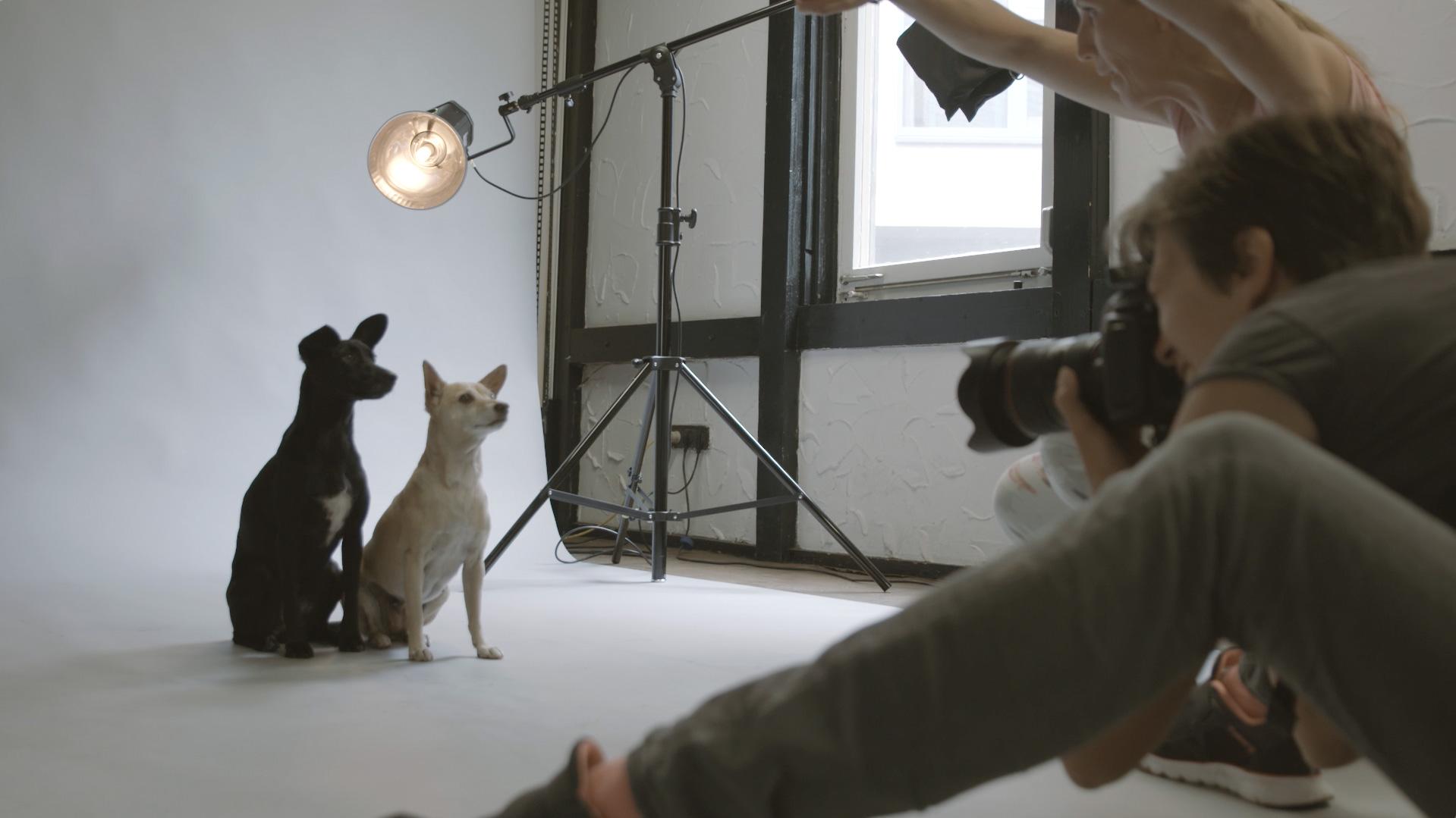 Trailer Hundeprojekt
